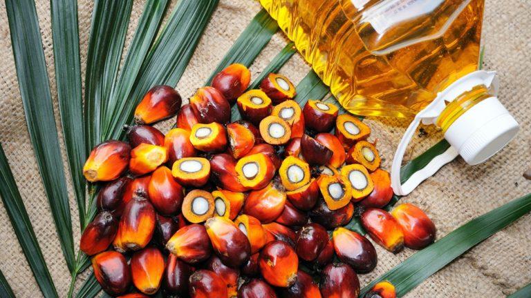 Tayland palm yağı ticareti için blokzincirini araştırıyor